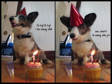 Corgi Birthday Meme - 100 best happy birthday meme images on pinterest