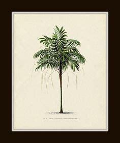 palm tree art print antique botanical art prints home
