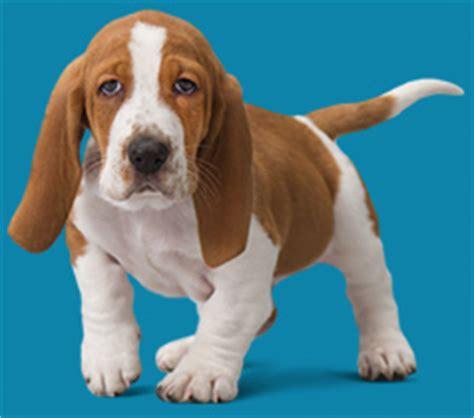 Cat And Dog Images Puppy Wellness Plans Optimum Wellness Plans Banfield Pet Hospital