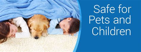 Carpet Cleaning Safe For Pets     CitruSolution of Birmingham   (205) 509 5519