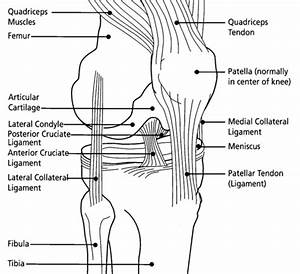 New Ligament In The Knee Discovered