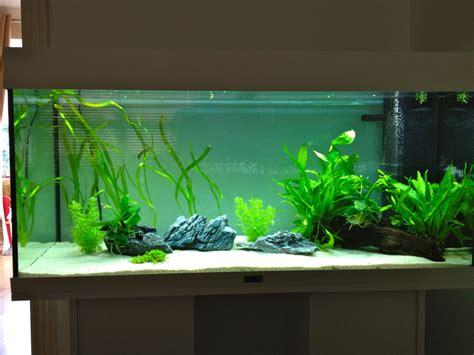 my aquarium juwel 180l uk aquatic plant society