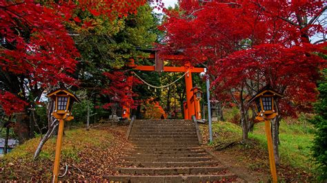 fonds decran fujiyoshida porte echelle arbres automne