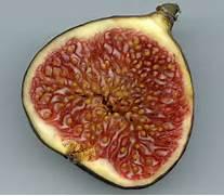 Strangler Fig Flower