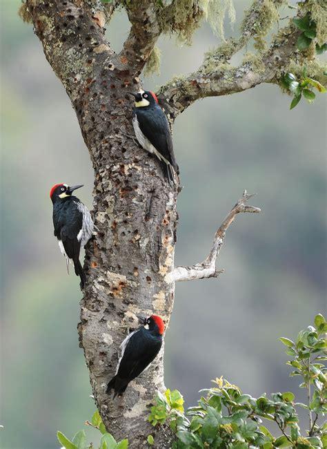birds  southern california humanities sciences