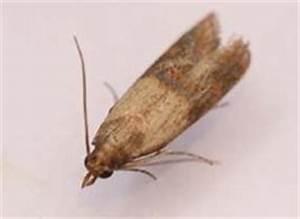 Mites Alimentaires Cycle De Reproduction : lutter contre les mites alimentaires ooreka ~ Dailycaller-alerts.com Idées de Décoration