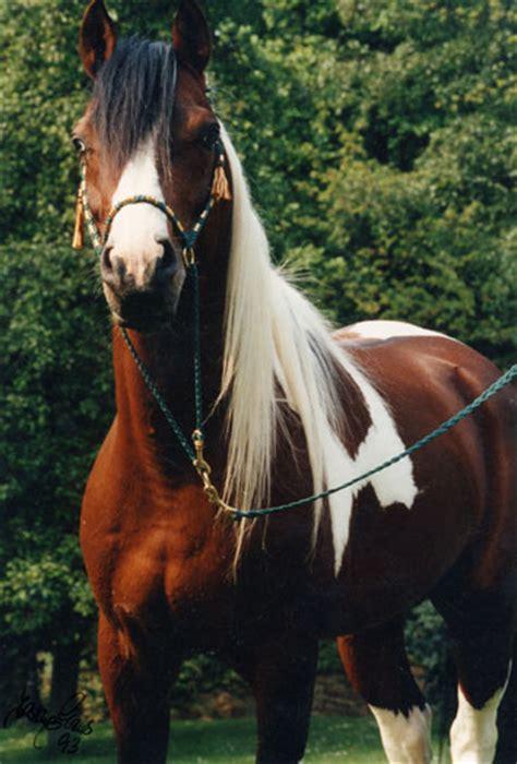 welche fellfarbe bei pferden moegt ihr  liebsten seite