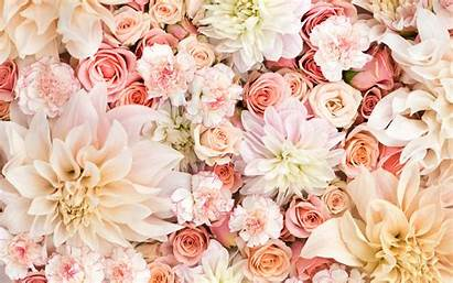 Roses Carnations Pastels Pastel Flower Pink Rose