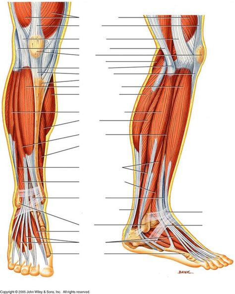 This is a table of skeletal muscles of the human anatomy. Human Muscles Diagram : human-leg-muscles-diagram ...