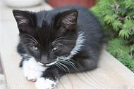 Crying Kitten