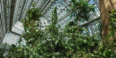 Restaurants Nähe Botanischer Garten Berlin by Marrying In The Botanical Garden Special Wedding
