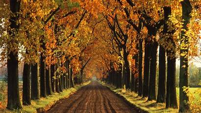 Fall Trees Autumn Tree Backgrounds Wallpapers Lined
