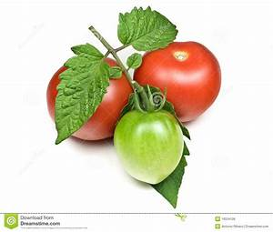 Red And Green Tomatoes Royalty Free Stock Image - Image ...