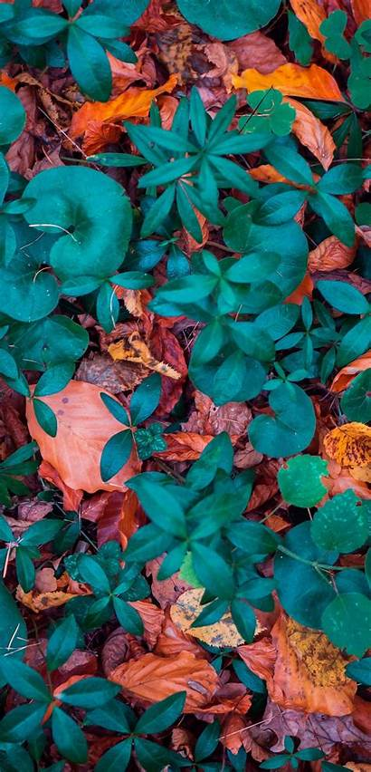 Autumn Leaves Mobile Fallen Forms Colorful Walls