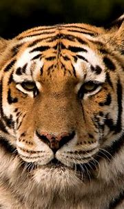 19 Best Tiger Reserves in India: Places to Go Tiger ...