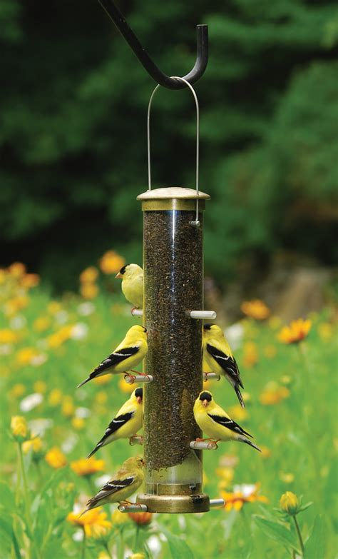 birds unlimited bird feeders birds unlimited how to stop sparrows from taking