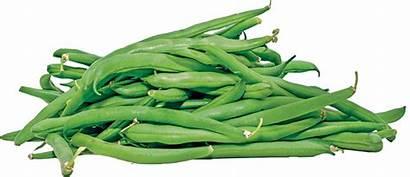 Beans Organic Lakeside Bean