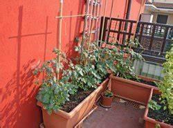 Gurken Im Kübel : gurken auf dem balkon ziehen anleitung tipps zum anbau ~ Frokenaadalensverden.com Haus und Dekorationen