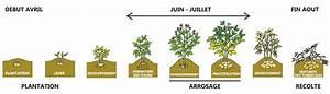 Période Pour Planter Les Pommes De Terre : planter des pommes de terre o quand et comment les ~ Melissatoandfro.com Idées de Décoration