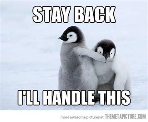 Cute Penguin Meme - pictures of baby penguins funny 15 january 2012 in cute pictures comment penguins