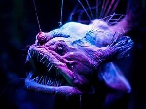 Scary Deep Sea Creatures | Scary deep sea creatures ...