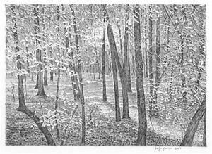 Georgia Forest III 2007 - Series