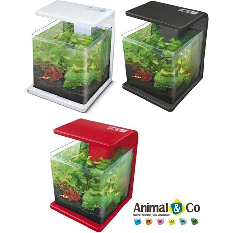 d 233 coration aquarium combattant