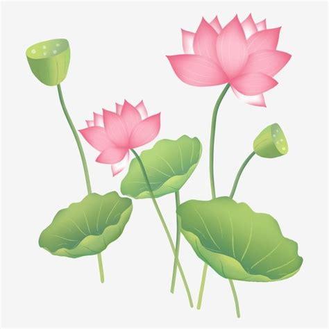 Lotus Lotus Leaf Lotus Lotus Seed, ดอกบัว, บัว, ใบบัวภาพ ...