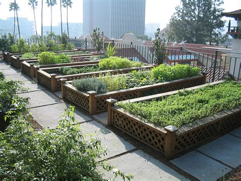 roof garden plants the benefits of roof gardens in an urban setting keep oakland beautiful