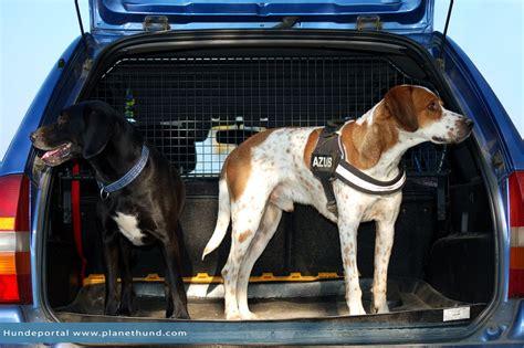 autofahren mit hunden ratgeber und tipps von planet hund