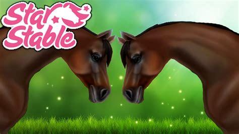 horse stable star sso quarter fastest american