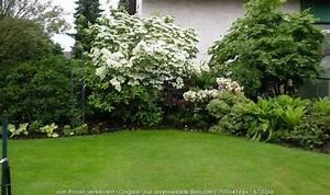 Gartenzaun Höhe Zum Nachbarn : str ucher heckenpflanzen hartriegel ~ Lizthompson.info Haus und Dekorationen