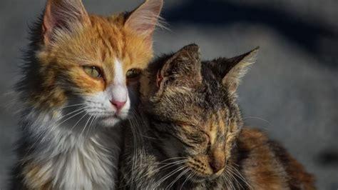 katzenbilder lustige sch 246 ne katzen bilder kostenlos