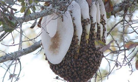 latest buzz roadside bees garner attention