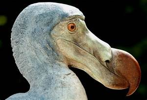 Dodos Still Exist Say One In Four Brits Telegraph