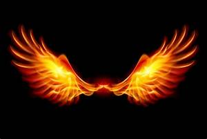 Phoenix Oiseau Wallpaper HD Cool #kp4bhes1dg 2503x1676 px ...