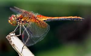 Dragonfly - Redorbit