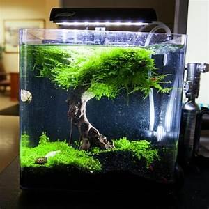 Idee Decoration Aquarium : id es et astuces comment cr er un nano aquarium ~ Melissatoandfro.com Idées de Décoration