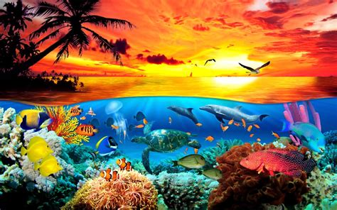 Marine Animal Wallpaper - sea animals wallpapers wallpaper cave