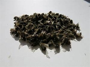 Пчелиный подмор в лечении псориаза