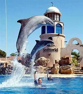 sea world seaworld san diego california best honeymoon With honeymoon places in california