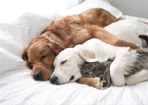 cuddly cat  dog  friends  soothe  soul