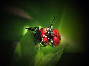 Winzige Rote Tierchen : kleine rote k fer insect stockfotos insect bilder alamy ~ Lizthompson.info Haus und Dekorationen