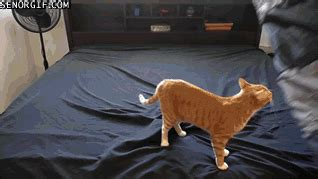 bed frames for size bed cats help gif find on giphy