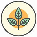 Icon Organic Organico Allergy Icono Icons Producto