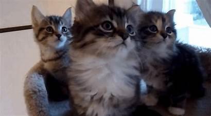 Kittens Synchronization Perfect