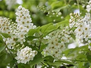 Heimische Pflanzen Für Den Garten : einheimische pflanzen f r den naturnahen garten ~ Michelbontemps.com Haus und Dekorationen