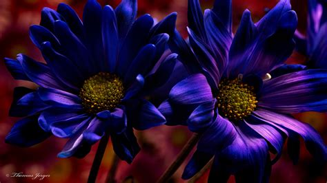 beautiful high resolution purple hd wallpapers