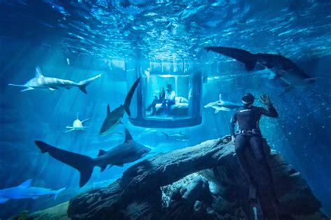 nuit dans un aquarium airbnb et si vous passiez la nuit au milieu de 35 requins la banane qui parle