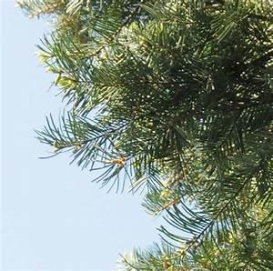 Was Ist Das Für Ein Baum : was ist das f r ein baum mein sch ner garten forum ~ Watch28wear.com Haus und Dekorationen